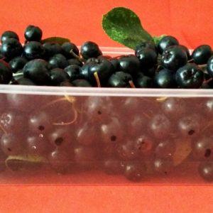 Freshly Picked Aronia Berries 200gram Bag